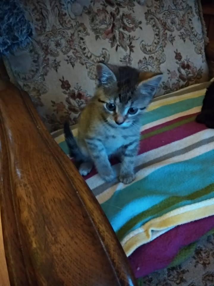kočka Betynka