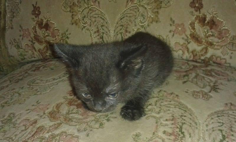 Kočička Karolínka