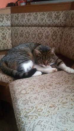kočka Bohunka