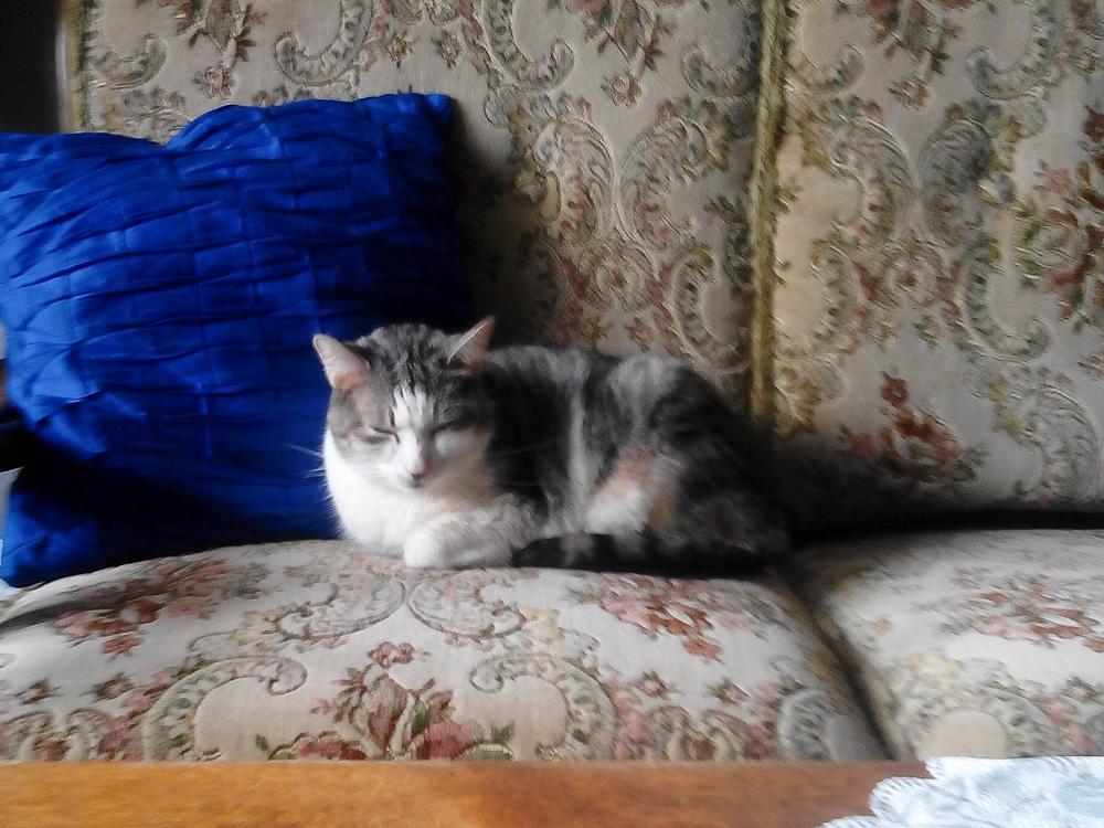 Kočka Izabela
