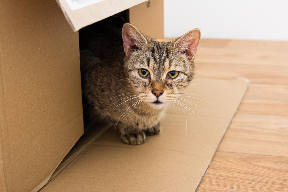 Kočka Žofka