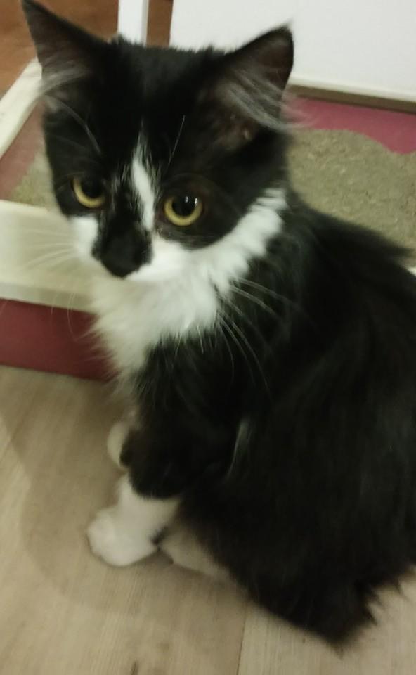 Kočička Fifinka