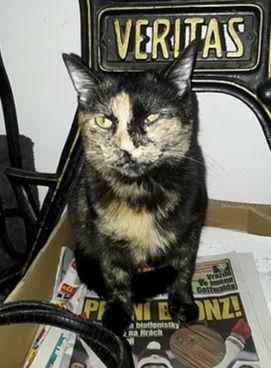 Jsem starší kočka odebraná ze špatných podmínek, po zkušenostech s lidmi nemám ráda návštěvy.