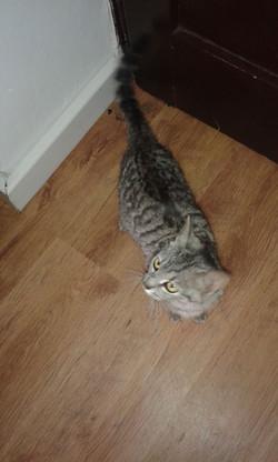 Kočka Poly