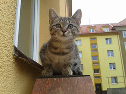 Kočka Mourinka