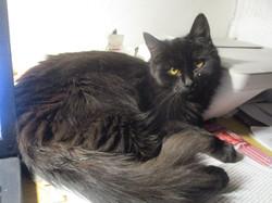 kočka Elinka