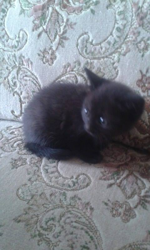 Kočička Majda