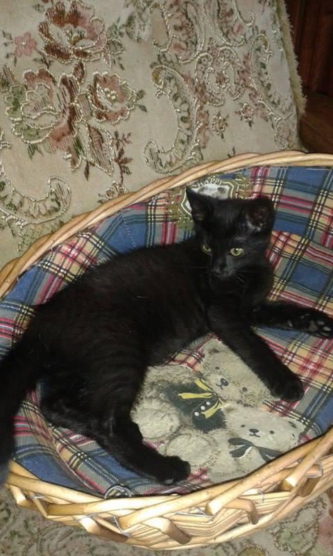 Kočička Johanka