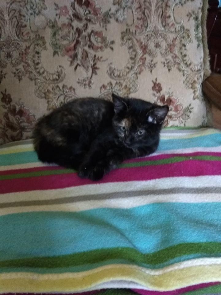 kočka Káťa