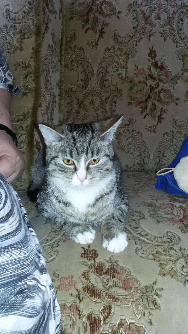 kočka Gábi