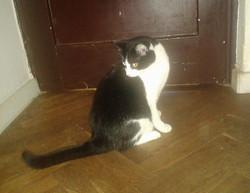 Kočička Ornela