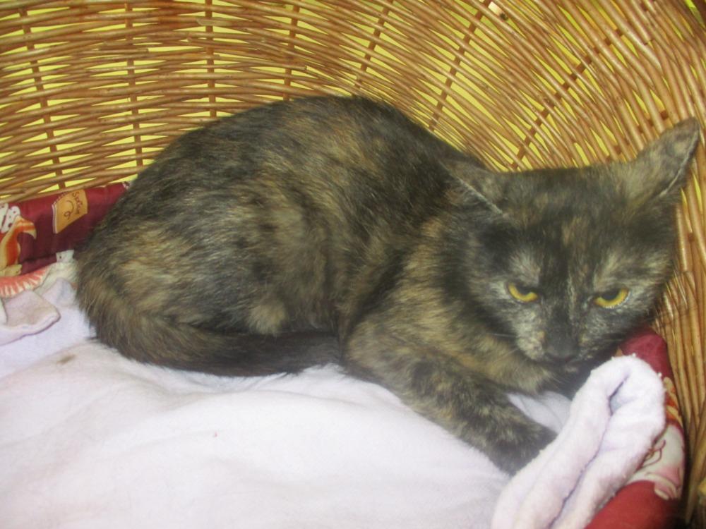 kočka Fanynka