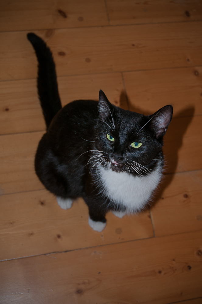 Kočka Nelly