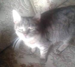 Kočička Besi