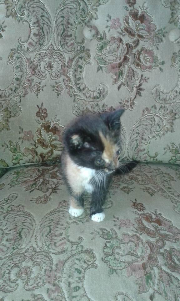 Kočička Libuška