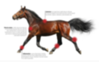 Horse-with-pain-indicators-info.png
