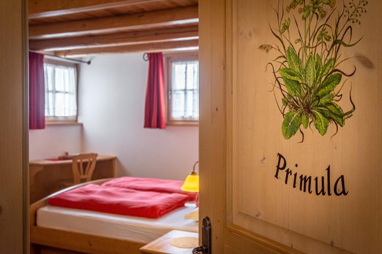ingresso Primula
