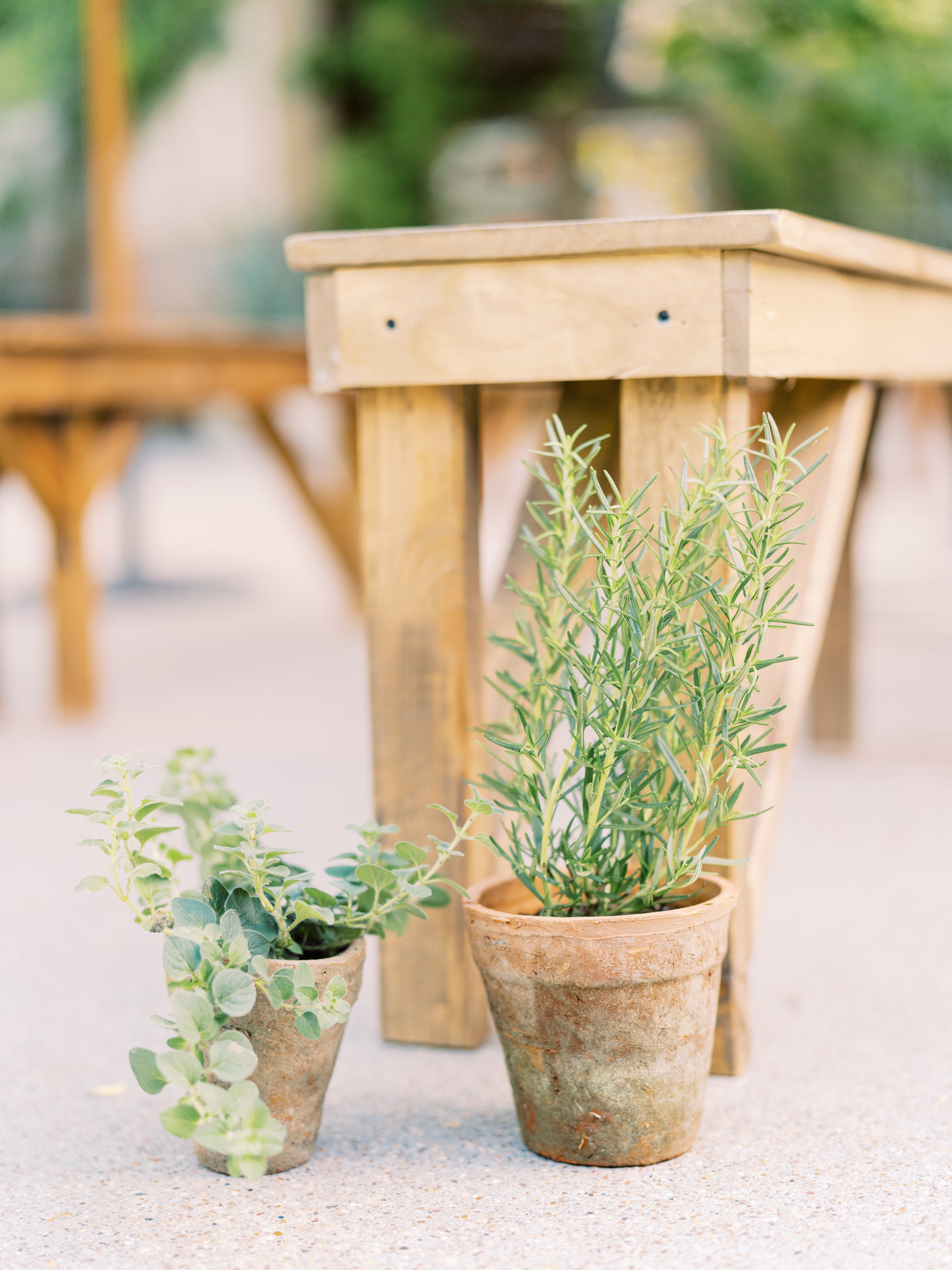 Assorted herb plant chair markers. Photo: Gaby Jeter