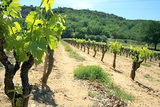 Les Vignobles du Piemont Cevenol - jean-