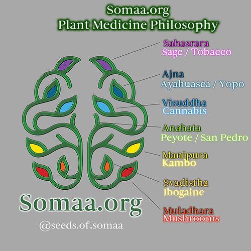 Somaa p3.jpg
