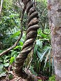 ayahuasca-active-ingredients.jpg