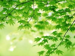 materiaal green-leaves