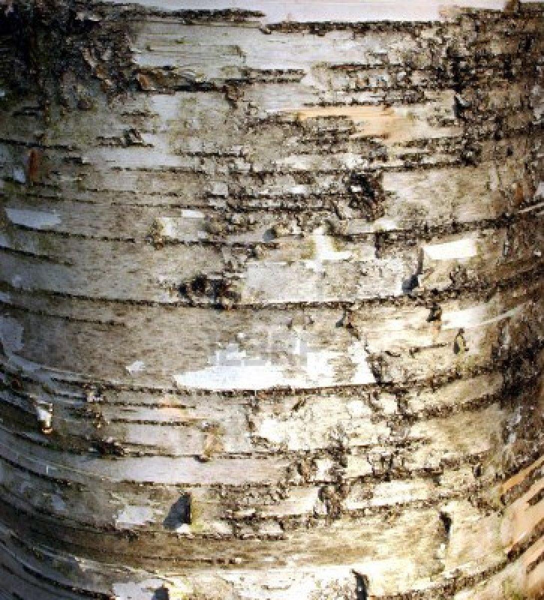 materiaal birch-bark