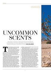 11. Oman's precious frankincense City AM