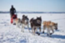 wycieczka psim zaprzęgiem po Islandii