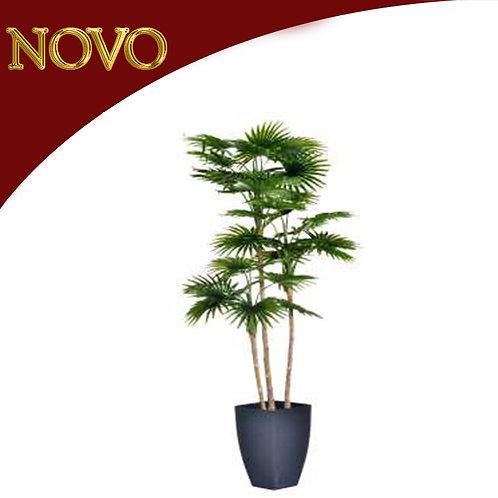 Planta c/vaso
