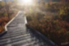 秋の朝道.jpg