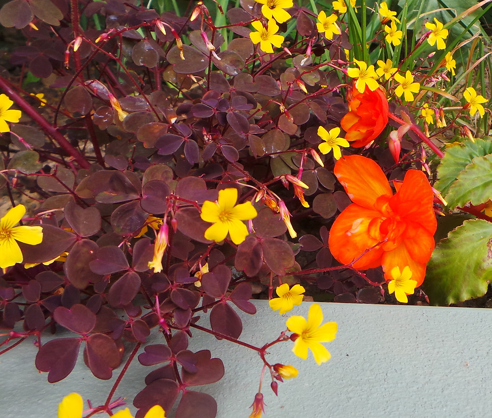 yellow, orange and russet red foliage and flowers