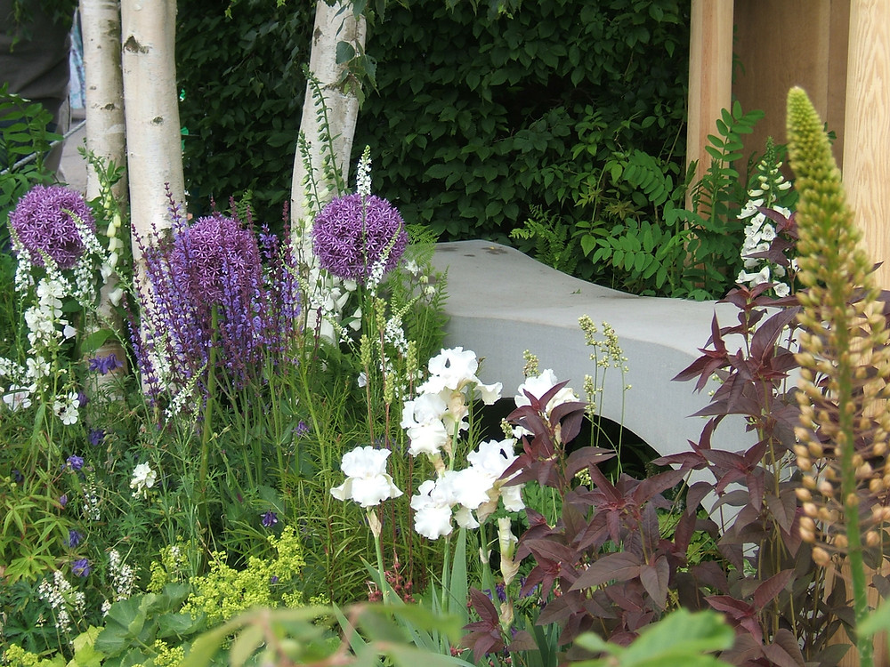 White stems of Betula with purple aliums and white iris great colour combinations in the garden