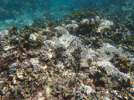 Anse Baleine Coral Reef (Mahe, Seychelle