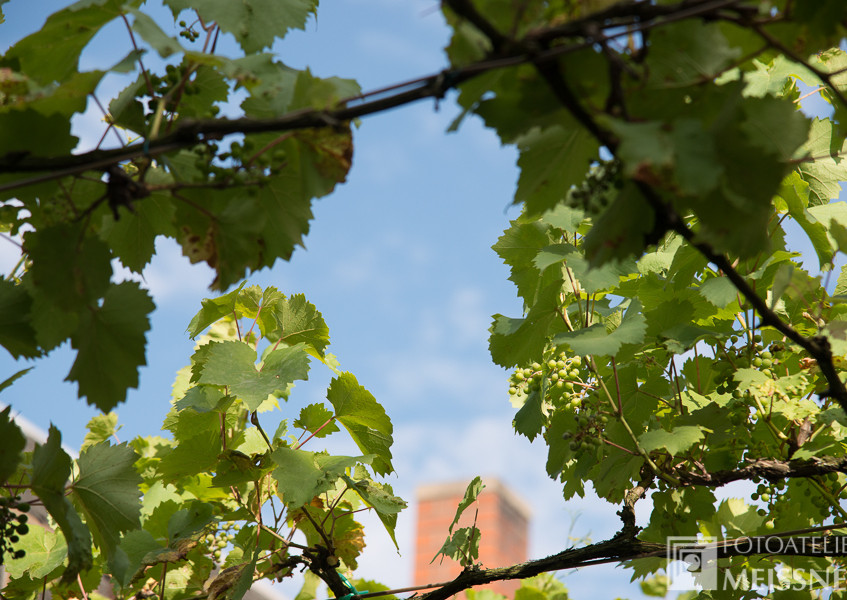 Wein auf der Hauptstrasse