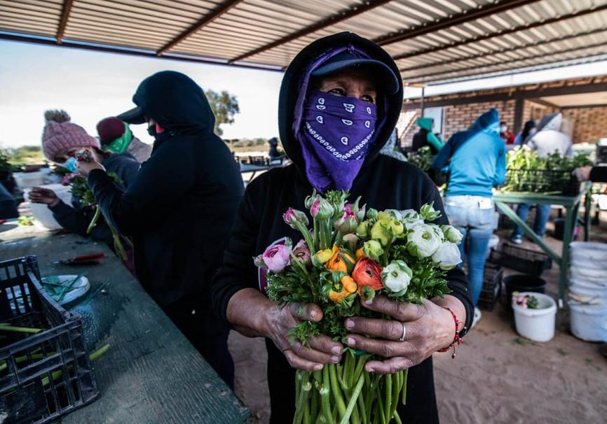 """""""Los Nuevos Colores del Valle de Mexicali"""", un homenaje a las manos que cosechan flores"""