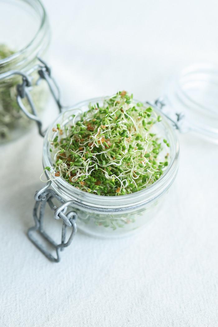 Graines germées brocolis - Primesautier Traiteur Vegan