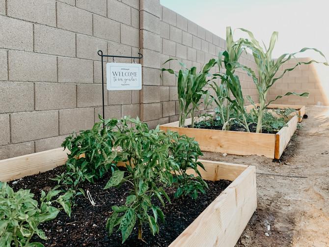 Creating a Raised Garden