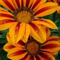 double-colour-1172979-1599x2132.jpg