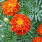 flowers-1391071-1600x1200.jpg