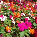 flowerbed-1455976-1280x960.jpg