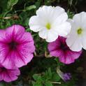 flowers-1-1519014-1600x1200.jpg
