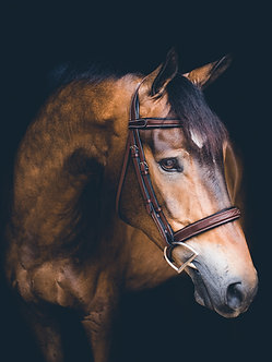 The Hunter Bridle