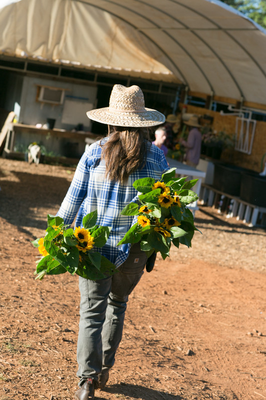 Organinc_Flower_Farming_Stones_Throw_Farm_CA_Sunflowers.jpg