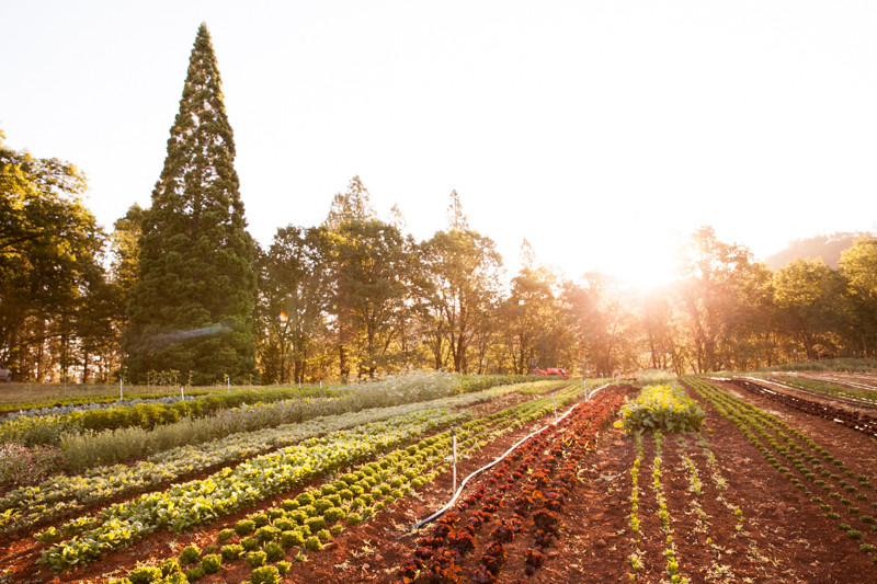 Stones_Throw_Farm_CA_Organic_Farm_Field.jpg