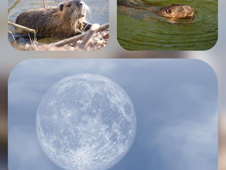 Pleine Lune des CASTORS - Ce lundi 30/11/2020 - 10 h 32 min 04 sec - Impact sur nos vies - Guidance