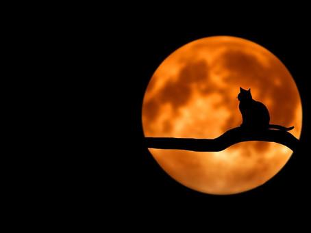 Pleine Lune de ce vendredi 5 juin 2020 - 21 h 12 min 43 sec.