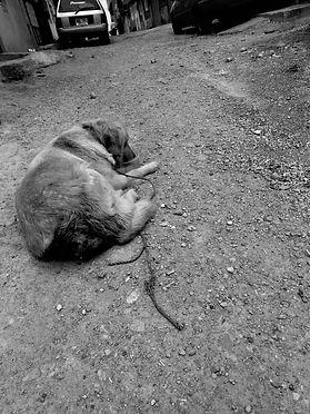 Alerta por el aumento de casos de maltrato animal