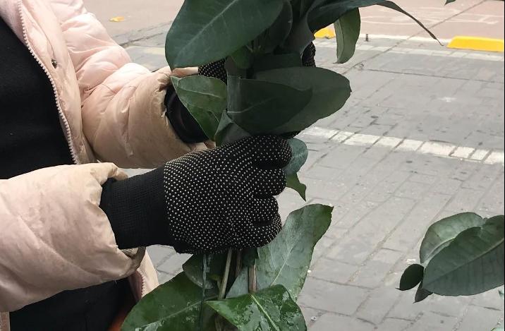 Liz bella ofrece sus eucaliptos para la venta