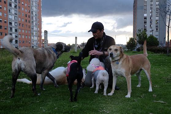 Un ingeniero y seis perros: 26 huellas y 1000 recuerdos